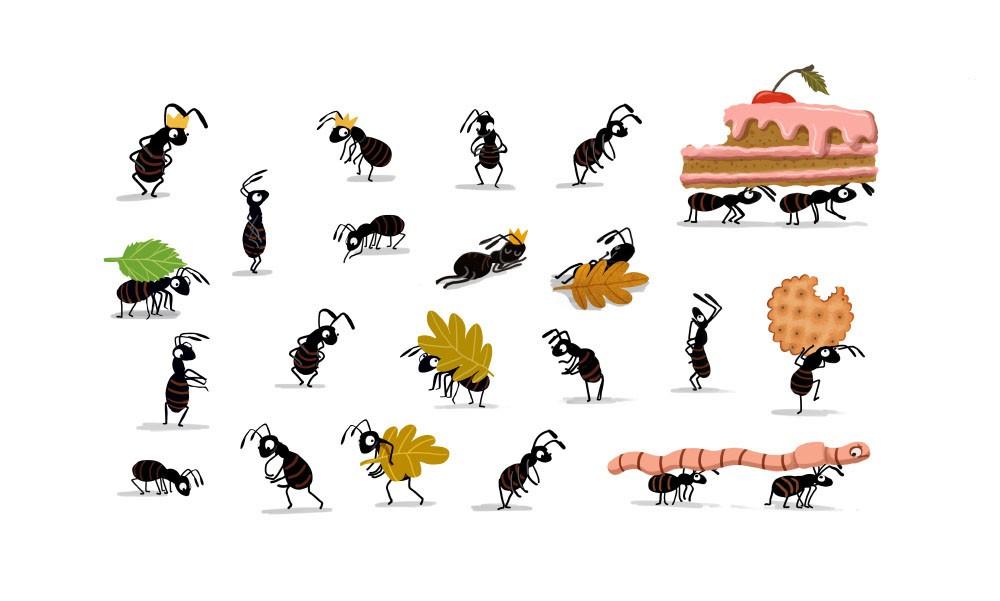 mrówki_2